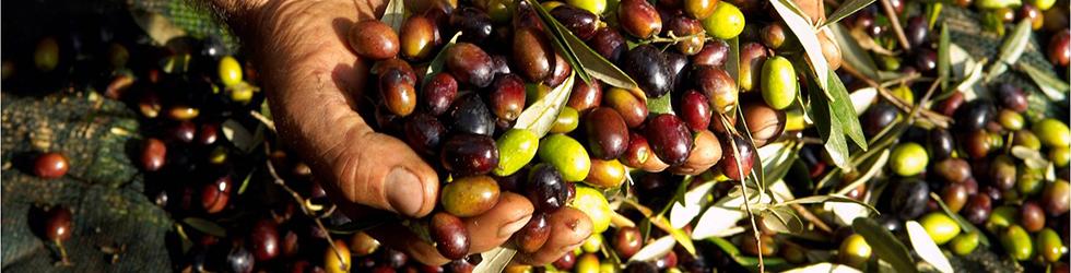 olive-sabina